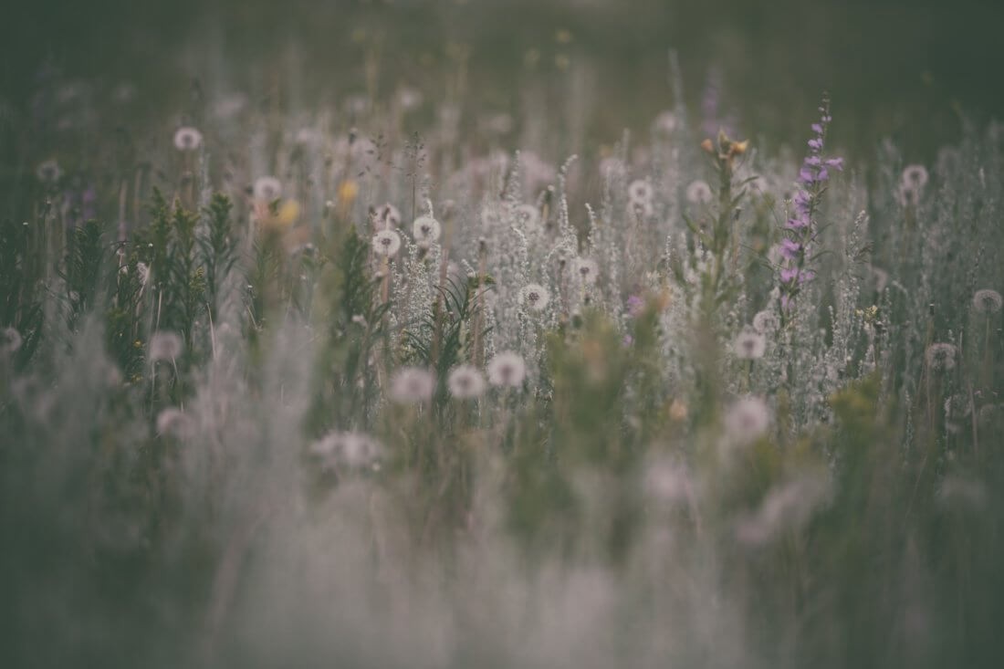 AllergiesWellness